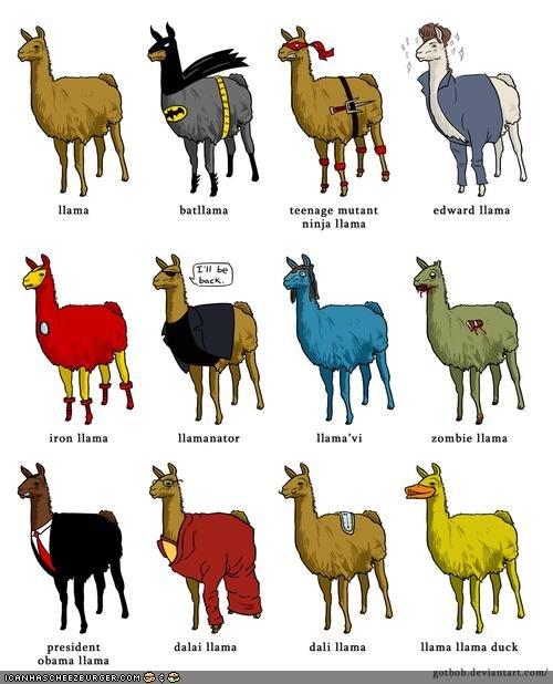 Llama's Cousins. .