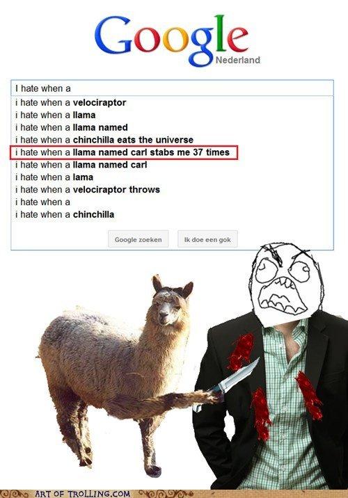 Llamas. FREAKING LLAMAS. Also see tags.. Nederland i,' I hate when a i hate when a i hate when a llama i hate when a llama named i hate when a chinchilla eat: t