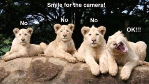 loner lion. .
