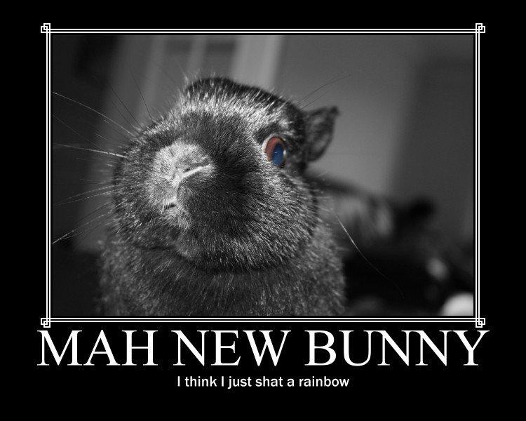 Mah new bunny. ITS MAH NEW BUNNY AND I WUV IT. I think t just shat a rainbow
