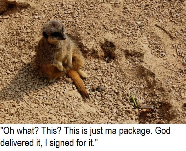 meerkat. family guy saying.. World keeps on spinnin'.