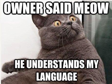 "Meow. . Ill"""