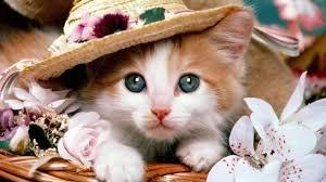 Miss kitty. .