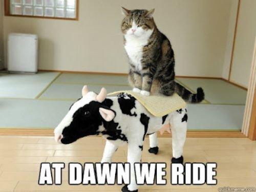 Moo. LOTR kitten...