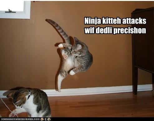 ninja cat attacks. .