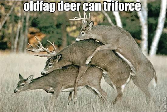oldfag deer can triforce. oldfag deer can triforce. thieir' '. lulz