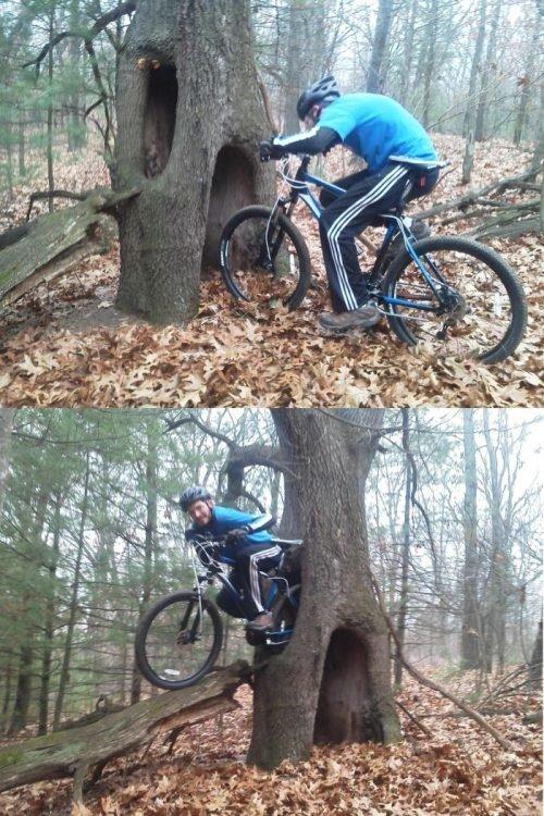Portal Tree. .