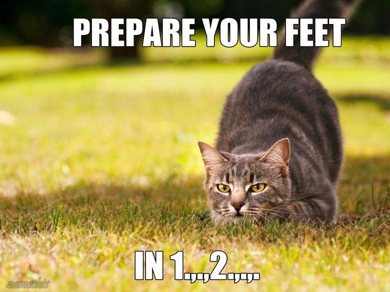 random cat post. teh description? click for view i lied again. PREP . FEET. LIAR!