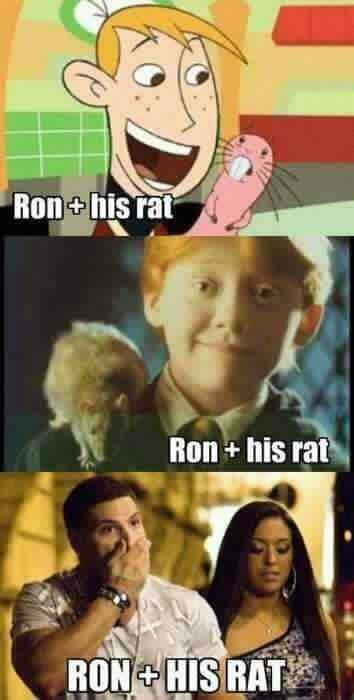 Rons and rats. . u Hiya: his rits,