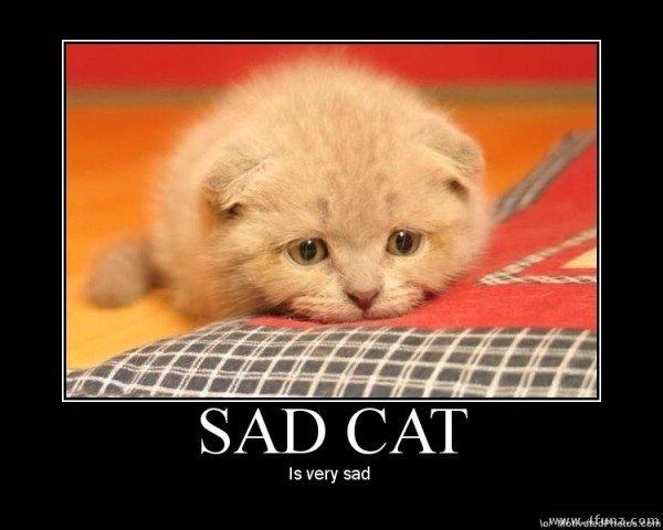 sad+cat_c89d66_3490245.jpg