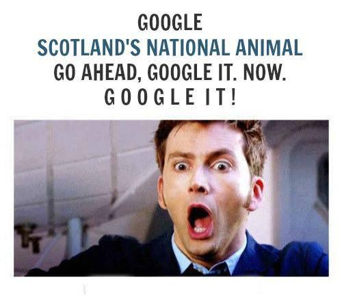Scotland's national animal. . SCOTIAN D' S NATIONAL ANIMAL M MEM, GOGGLE IT. NOW.