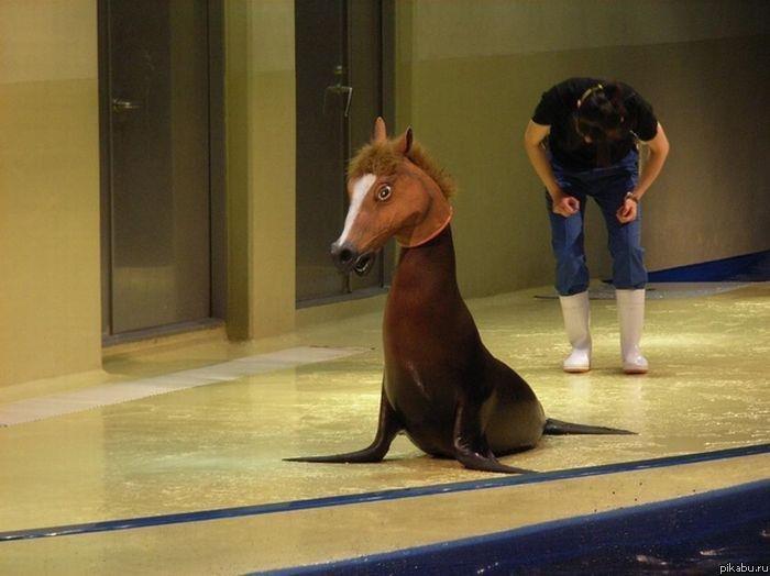 Sea Horse. .