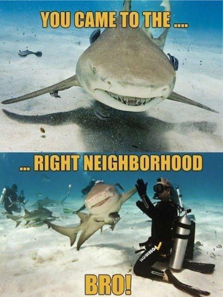 Shark Bro. . ll trt., ht mm _llooll. llr, (