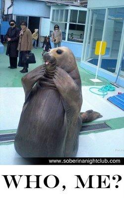 Silly walrus. U so silly.