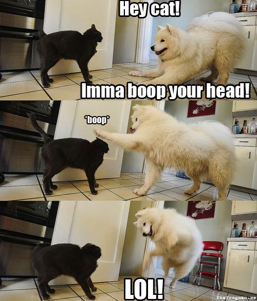 silly dog. .. Gotcha back doggeh!