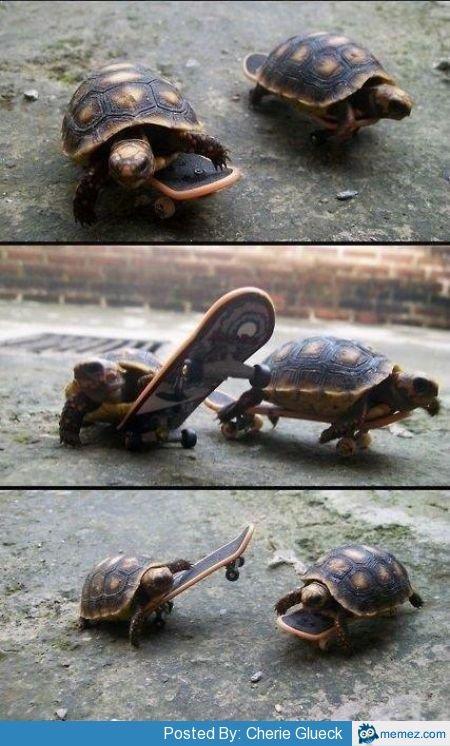 Skateboaders. So cute (:havn't seen here before credit to memez. Paste : R