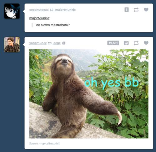 Sloth porn. .