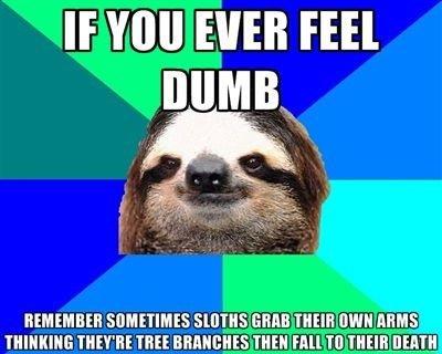 "Sloths. If you ever feel dumb. If . llet"", llt EVER mil."