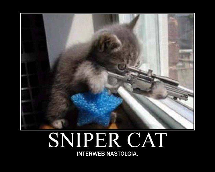 Sniper cat. . SNIPER CAT INTERWEB .. This is the funny junk I remember!