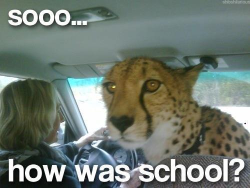 Soooo. .. Get in car, MFW