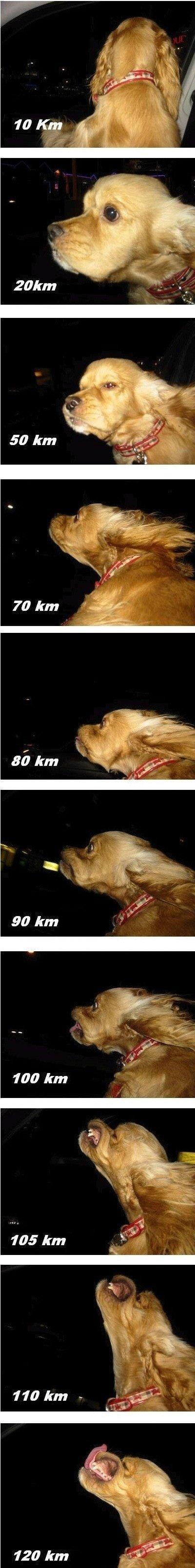 speeding up. . 50 km 90 km. Your dog enjoys speed. Mine just eats thumbs.