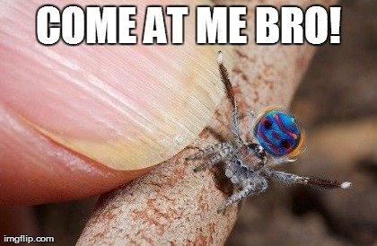spider bro. .