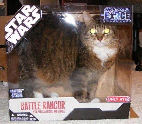 star wars cat. .