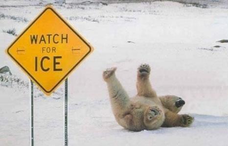 Stupid bear. Oh bear...