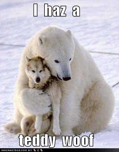 teddy wolf. .