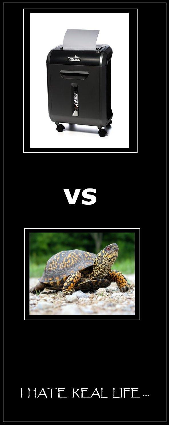 teenage mutant ninja turtles real life. teenage mutant ninja turtles in real life.... I HATE REAL LIFE