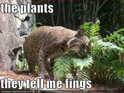 the plants tell secrets. they talk I swear!!.. Especially that Marijuana.