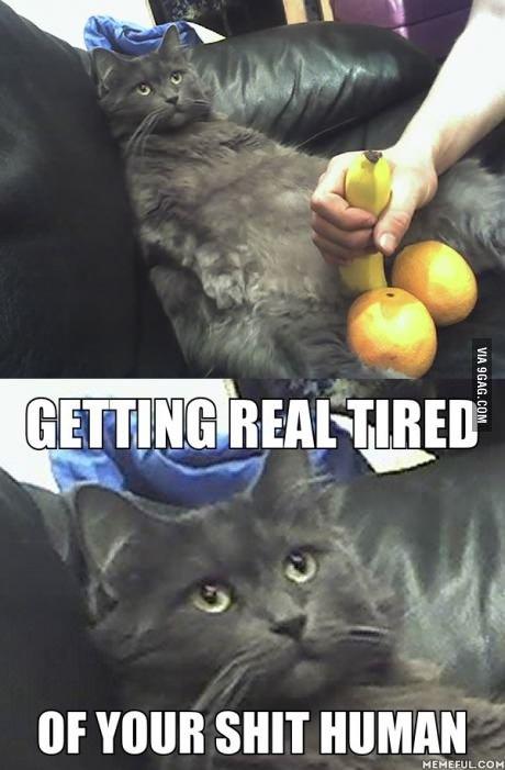 (untitled). . NUS 5117515 'HIE ttf HUMAN. the cat is dead