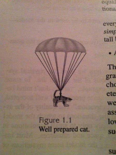 (untitled). . tiana. Well-prepared cat.