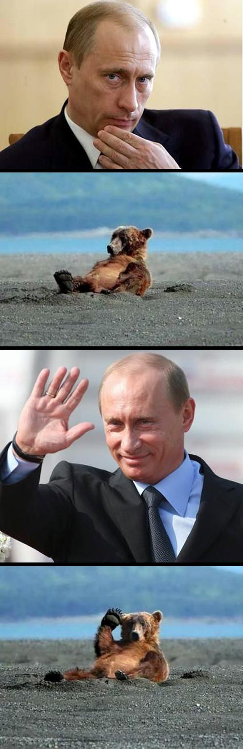 Vladimir Putin. Vladimir Putin.. it looks like he was PUTIN the bear on