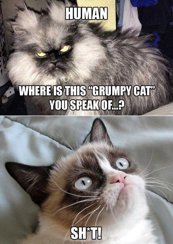 where is it?. .. It's too grumpy!