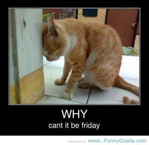 why it cant be friday?. why it cant be friday?.