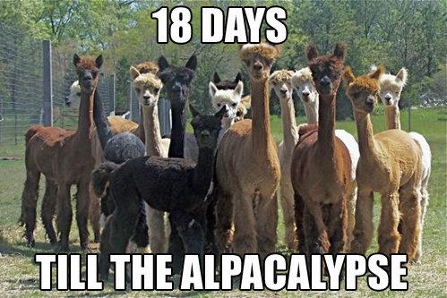 woo. .. Yet only 15 alpaca's....