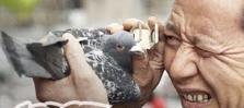 Yup. Thats a pigeon.. .