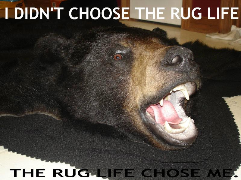 I didn't choose the rug life.