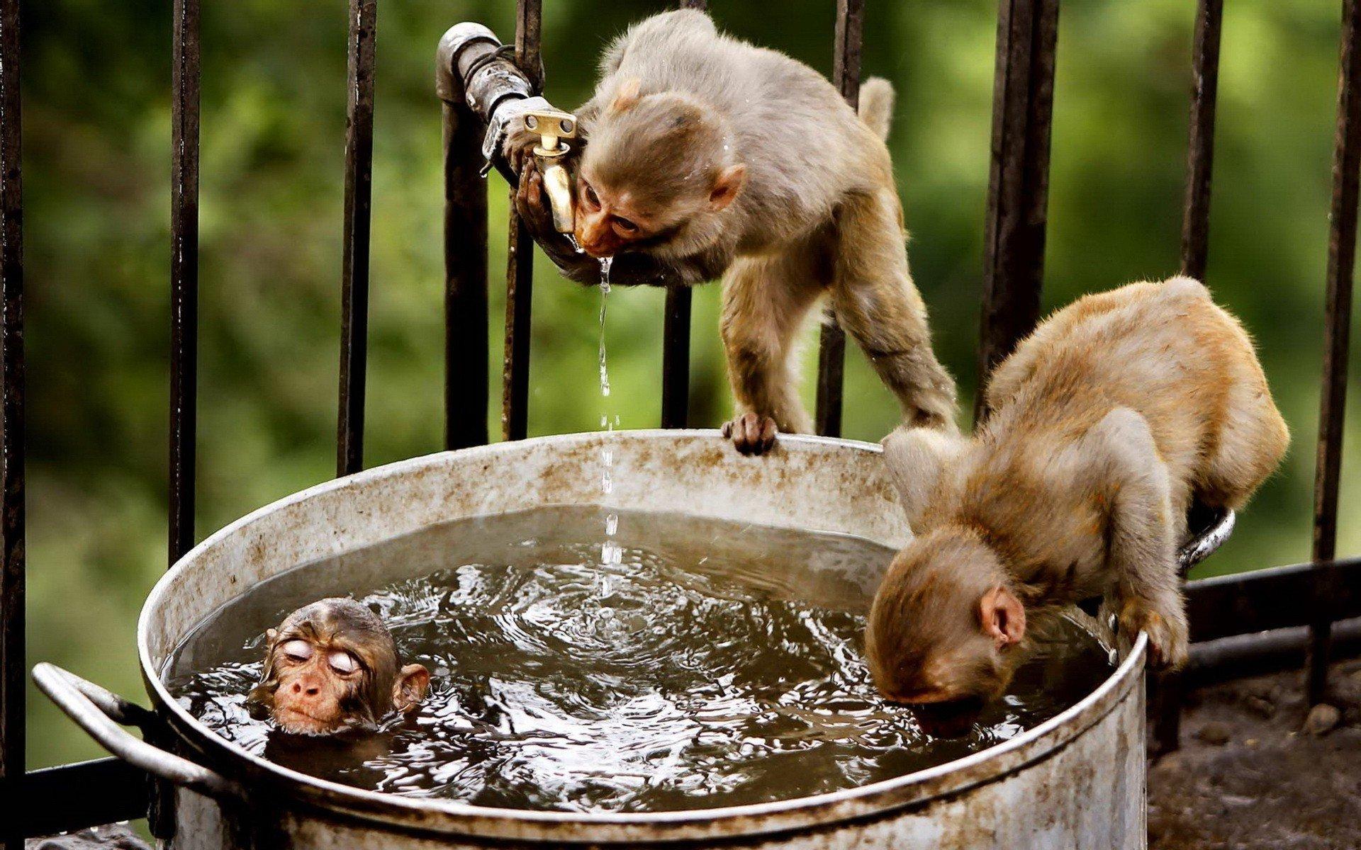 Monkey Hot tub party