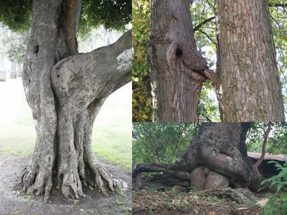 Секс на дерево