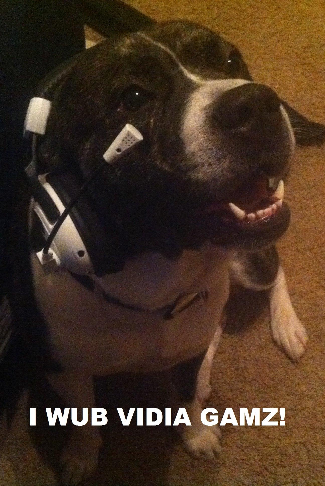 gamer dog loves games