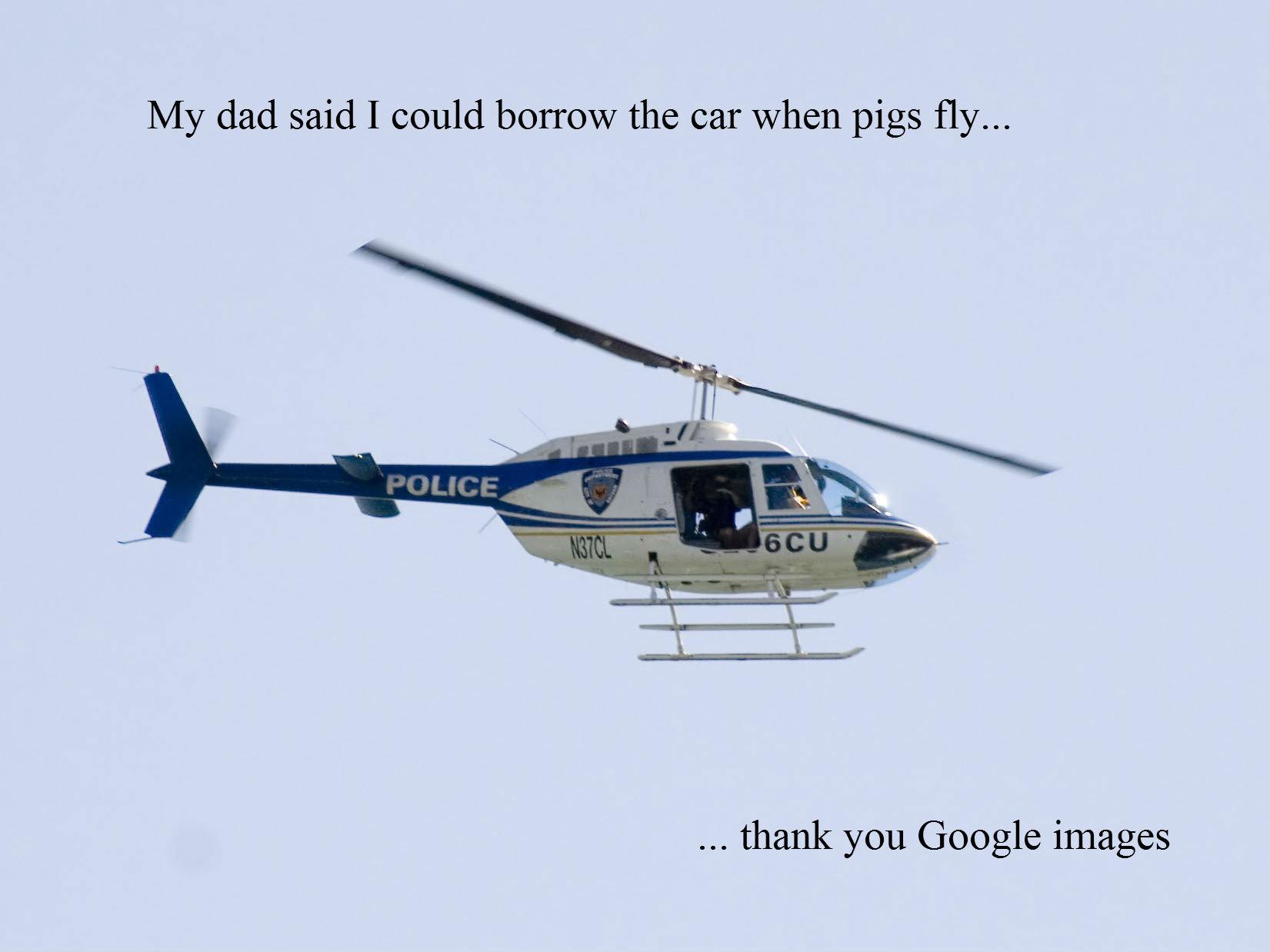 When Pigs Fly Meme 47568 Usbdata