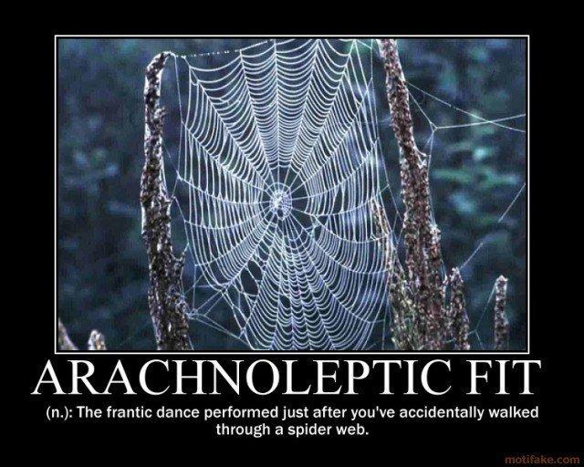 Ass hole spider net pic