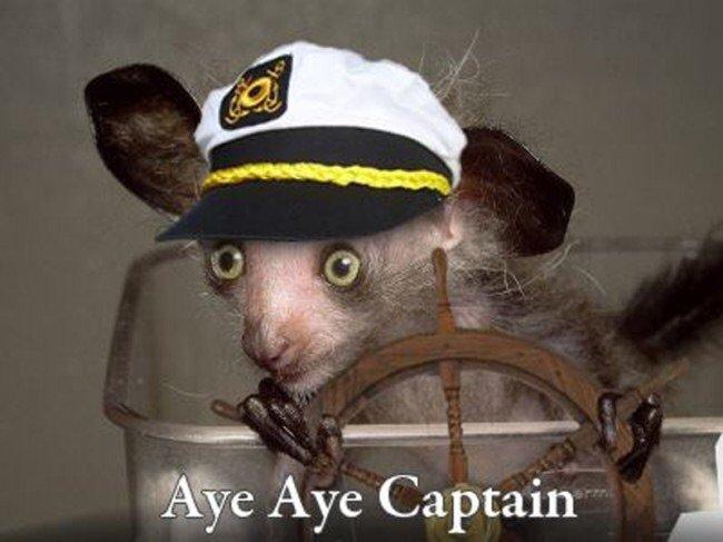 Woman Salute. Aye Aye Captain! — Stock Vector © Gal_Amar