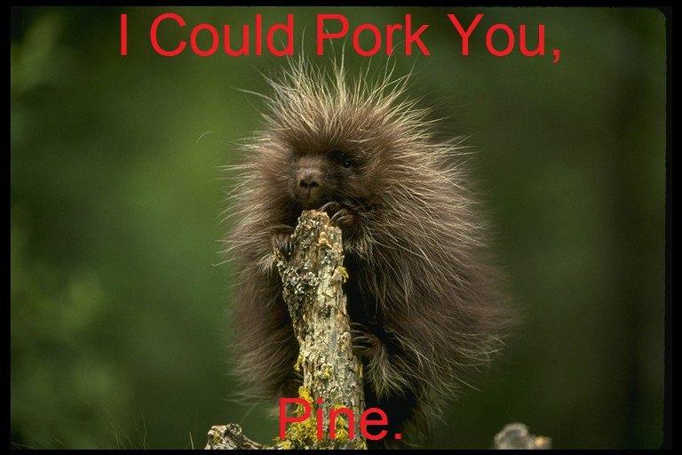 bad porcupine pun