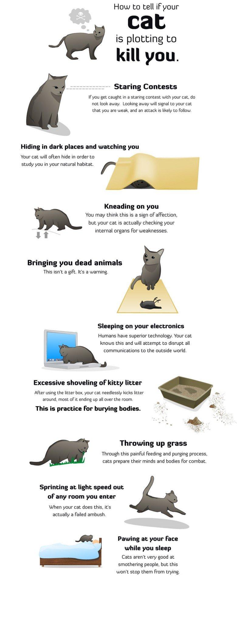 dentalife cat treats