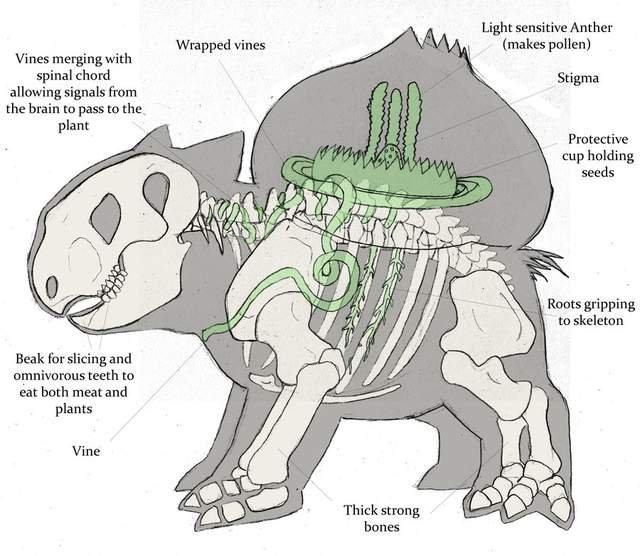 Bulbasaur Anatomy