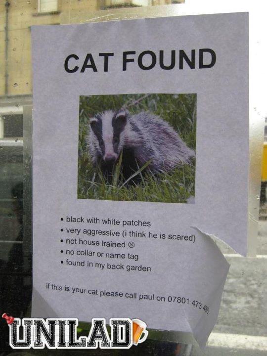 Cat+found_dc3a8e_3295090.jpg