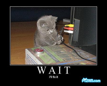Cat_75d646_826147.jpg